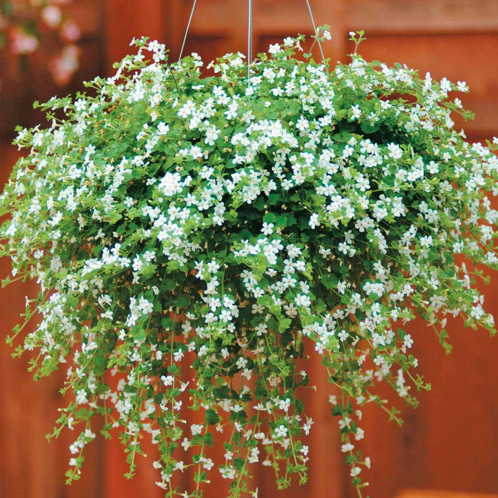Buy plants online in india supplified for Buy plans online